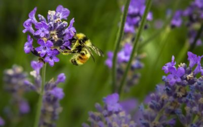 Byron Shire Chemical Free Landcare   Working Bee 16th December