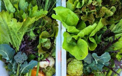 Future Feeders | Get a box load of veggies direct from the farm at Future Feeders