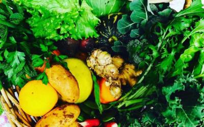 Future Feeders: Local, Seasonal Produce Boxes