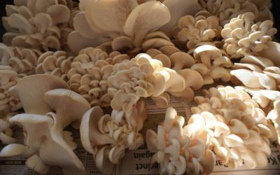 Mushroom Abundance | It's workshop time at Mullumbimby Community Gardens