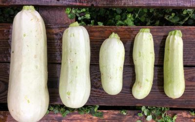 Future Feeders | One of these zucchini make the grade, can you guess which one?